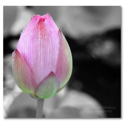 Αφίσα (μαύρο, λευκό, άσπρο, κρίνο, μπουμπούκι, λουλούδι)